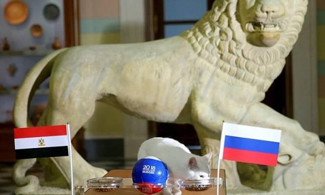 CHOÁNG: Mèo tiên tri dự đoán đúng cả tỉ số trận Nga vs Ai Cập